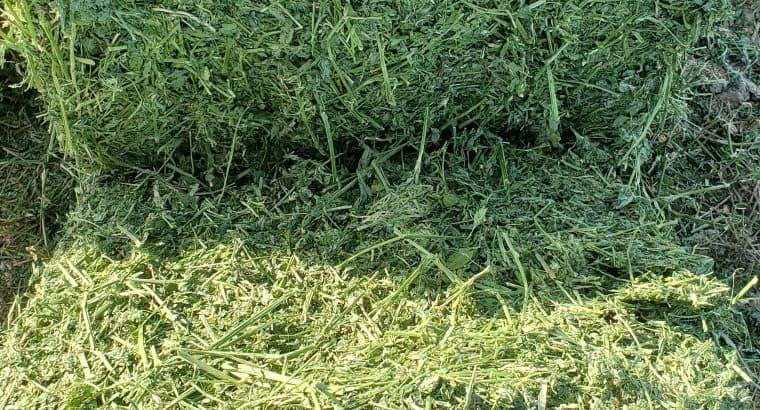 Hay Supplier