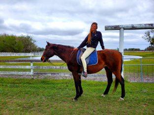 Superior Horsemanship Training Services
