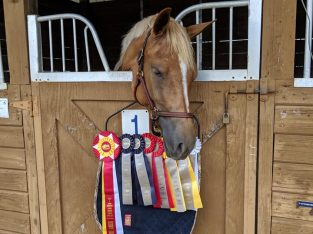 Super FUN and super EASY Large Pony