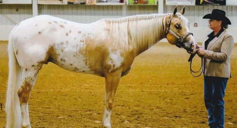 Stallion at stud