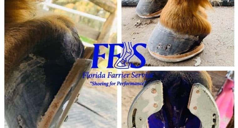 Multi Farrier Practice servicing Florida