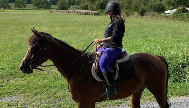 Beautiful 7yr ottb bay mare sound and sane great on trails