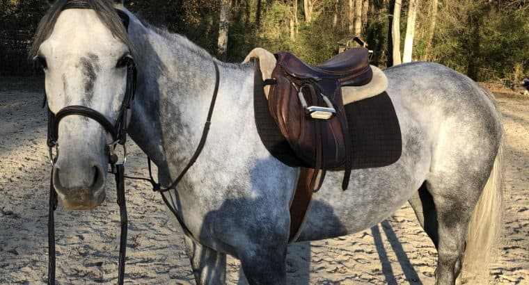 Fancy mare, can go in any direction!!!!
